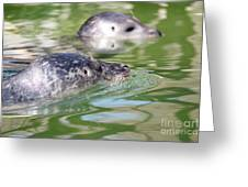 Two Seal Swimming Nature Scene Greeting Card