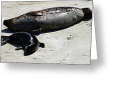 Two Seals Greeting Card