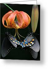 Two Spicebush Swallowtail Butterflies On A Turks Cap Lily Greeting Card