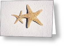 Two Starfish On The White Sand Greeting Card