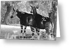 Two Stipers In Black And White Greeting Card