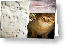 Two Stray Cats Greeting Card