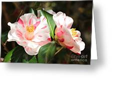 Two Striped Camellias Greeting Card