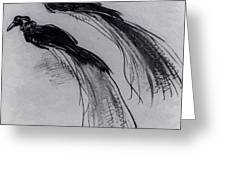 Two Studies Of A Bird Of Paradise 1630 Greeting Card