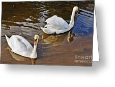 Two Swans On Spring Water Greeting Card