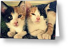 Two Tabby Cat Kittens Greeting Card