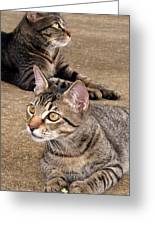Two Tabby Cats Greeting Card