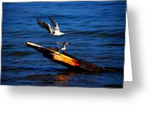 Two Terns A Tango Greeting Card