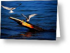 Two Terns Today Greeting Card by Amanda Struz