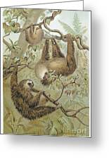 Two-toed Sloth Greeting Card