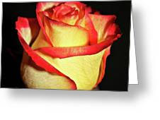 Two Tone Rose Greeting Card
