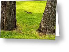 Two Trees And A Squirrel Greeting Card