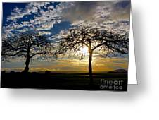 Two Trees Greeting Card by Bette Phelan