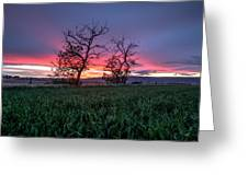 Two Trees In A Purple Sunset Greeting Card