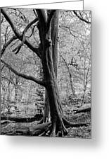 Two Trees In Spring - Mono Greeting Card