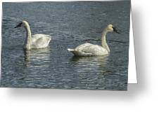Two Trumpeter Swans At Oxbow Bend Greeting Card