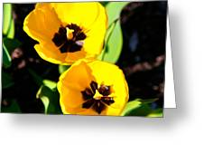Two Tulips 2 Greeting Card