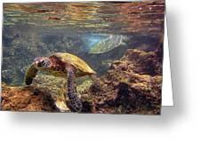 Two Turtles Greeting Card by Bette Phelan