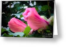 Two Unopen Pink Hibiscus Flowers Greeting Card