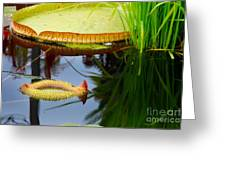 Two Victoria Water Lilypads Greeting Card
