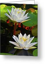 Two Water Lilies 004 Greeting Card