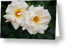 Two White Flowers Greeting Card