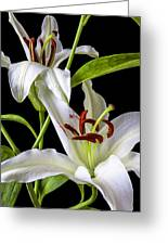 Two Wonderful Lilies  Greeting Card
