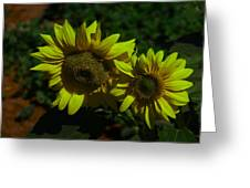 Two Yellow Beauties  Greeting Card