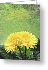 Two Yellow Gerber Daisies Greeting Card