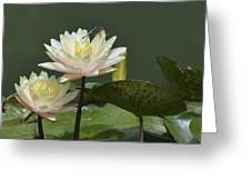 Two Yellow Water Lilies Greeting Card