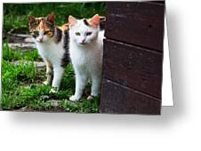 Two Young Cats Greeting Card