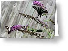 Two Zebra Swallowtail Butterflies Greeting Card