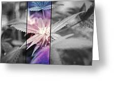 Tye-dye Bud Greeting Card