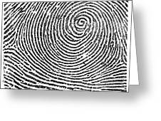 Typical Whorl Pattern In 1900 Greeting Card