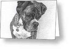 Tyson Greeting Card by Marlene Piccolin