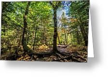 U Shaped Trees Cascade Mountain Ny New York Greeting Card