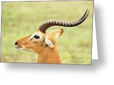 Ugandan Kob In Profile Greeting Card