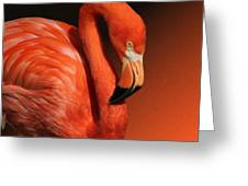 Ultimate Orange Greeting Card