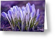 Ultra Violet Sound Greeting Card