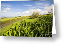 Ulupalakua Country Road Greeting Card by Ron Dahlquist - Printscapes