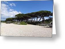 Umbrella Pine, Lerins Island Greeting Card
