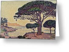 Umbrella Pines At Caroubiers Greeting Card by Paul Signac