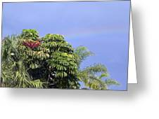 Umbrella Tree With Rainbow And Flower Greeting Card