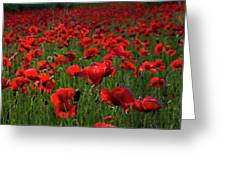 Umbria  Poppies 3 Greeting Card