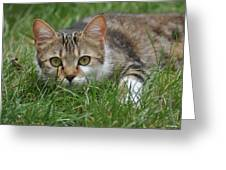 Un Chat Ecolo Greeting Card