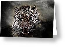 Un Gros Chat A Adopter Greeting Card