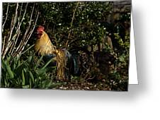 Uncle Rooster Greeting Card
