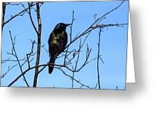 Uncommon Grackle Greeting Card