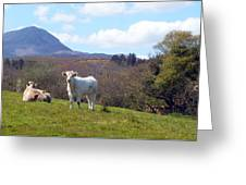 Under Muckish ,donegal  Greeting Card
