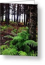 Under The Alaskan Trees Greeting Card